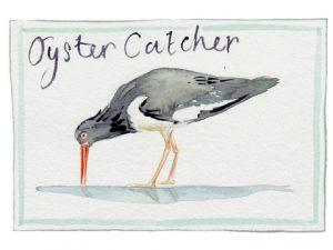 oyster-catcher2x